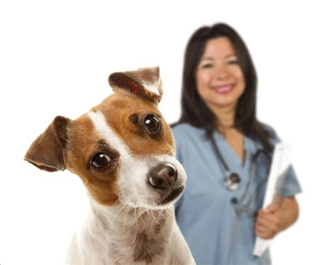 care credit for dogs veterinarians near me that take care credit myideasbedroom