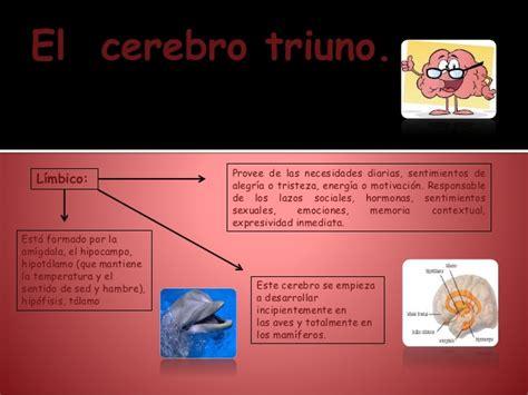 el cerebro obeso las 1503139301 el cerebro triuno y las relaciones humanas