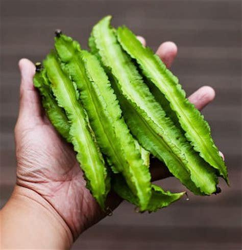 Harga Bibit Asparagus bibit benih kecipir jual tanaman hias