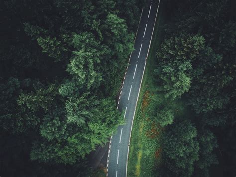 trees aerial view forest road wallpapers hd desktop