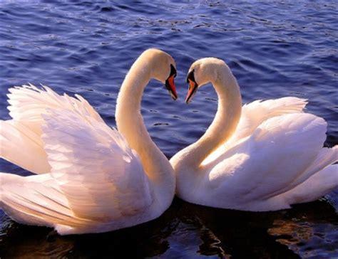 Tirai Burung Dan Sepasang Kekasih 8 hewan yang paling setia dengan pasangannya yunieka
