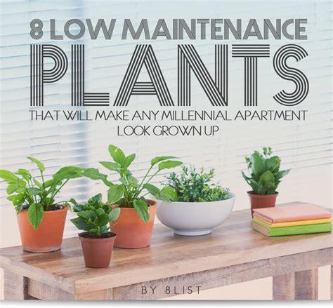 office plants no sunlight 100 office plants no sunlight best houseplants 9