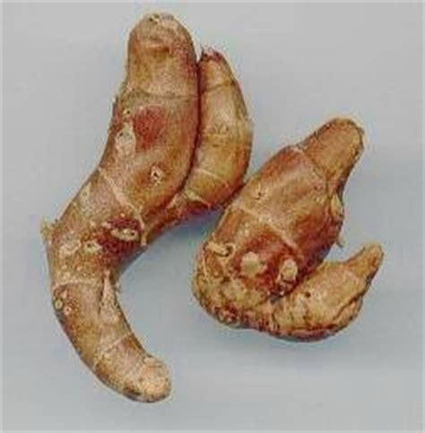 Minyak Atsiri Kencur khasiat kencur shatikah s weblog