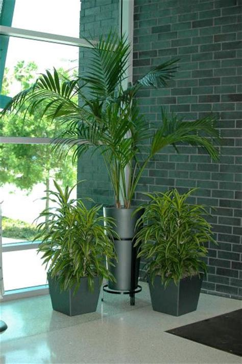 office plant decoration kl indoor plants for office office decor