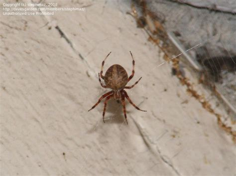 Garden Spider Identification Insect And Spider Identification Closed Spider With