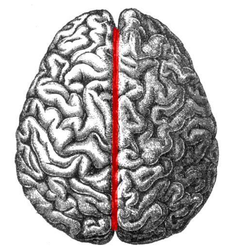human brain longitudinal section longitudinal fissure wikipedia