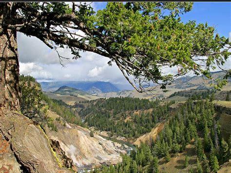 yellowstone national park and grand teton national park
