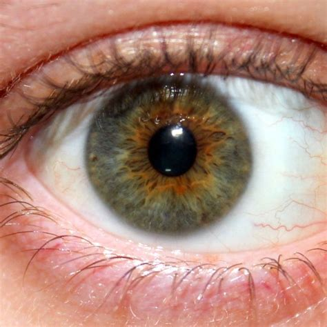 unique eye colors unique eye colors www pixshark images galleries