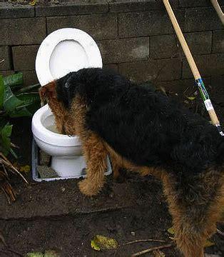 ultra gross  gross dog jokes