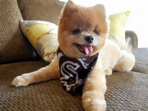 puppy that looks real 10 really dogs who don t look real viralpawz