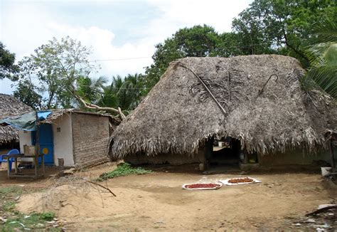 Thatch Hut Stock Pictures Photos Of Thatched Indian Huts From The