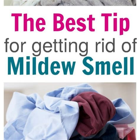 how do you get rid of musty smell in basement cleaning archives the house