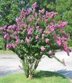 flowering shrubs for landscaping plants in the southern us