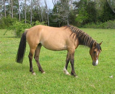 burro cojiendo pony mujeres cogidas por vergas de caballo videos gratis de