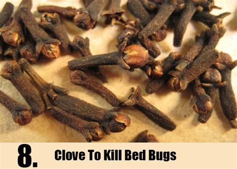 6 home remedies for removing bed bugs treatments
