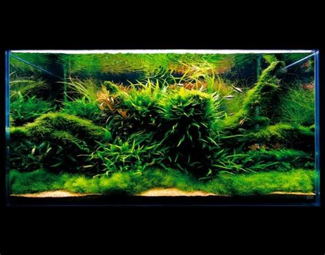 Green Machine Aquascape by Pin By Oliver Oomen On Aqua