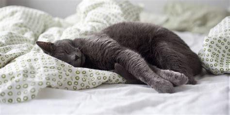 nel letto 10 posizioni nel letto che chi ha un gatto pu 242 capire