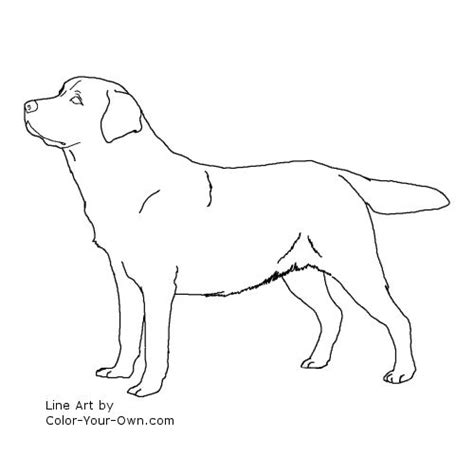 labrador coloring pages labrador retriever coloring page