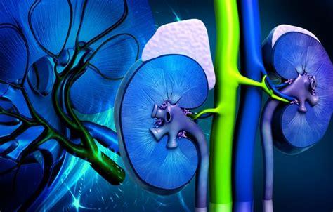 kidney color wallpaper colors kidney images for desktop section