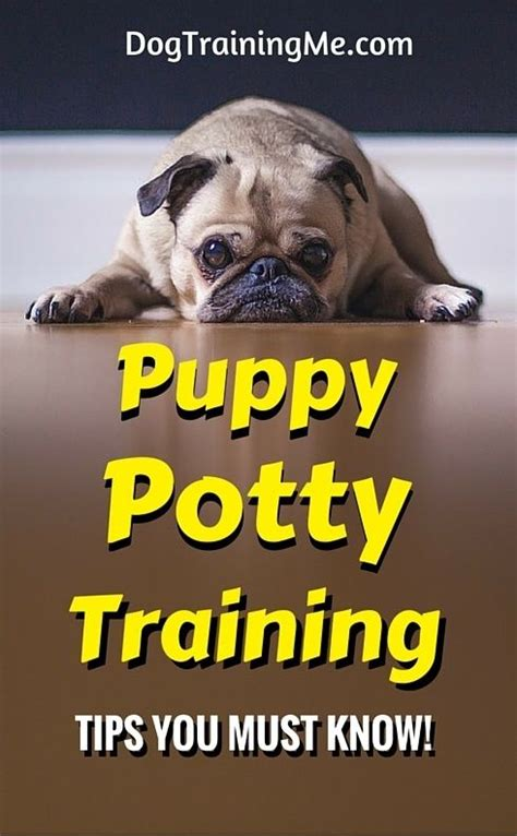 puppy potty tips potty tips and potty tips on