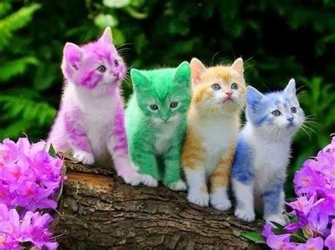 colorful cats colorful kittens pictures photos and images for