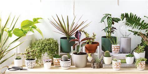 big impact  small indoor plants bunnings