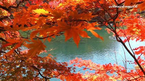 hd amazing autumn colors