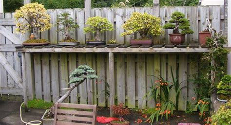 bonsai bench 26 best images about bonsai bench on pinterest gardens outdoor benches and shelves