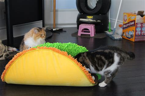 taco bed product review taco meoow cat bed