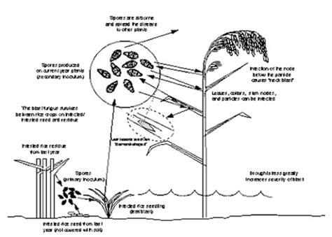 Blast 75wp tnau agritech portal crop protection