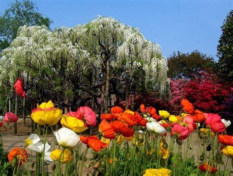 ashikaga flower park ashikaga flower park japan