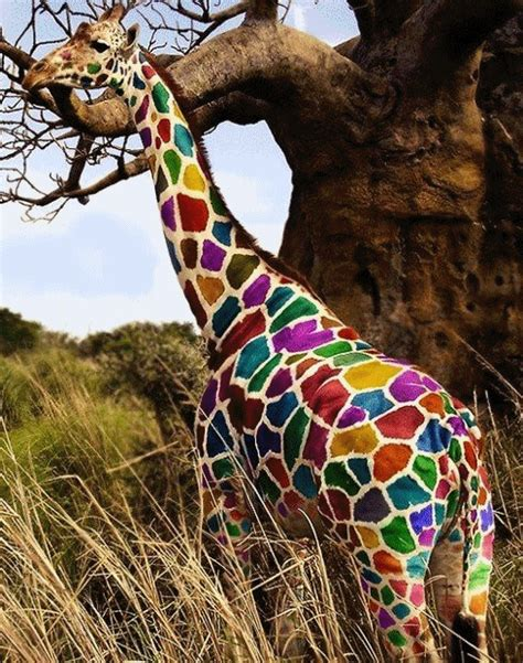 what color are giraffes giraffe colorful gifs wifflegif