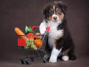 vegetables dogs can eat fruits vegetables dogs can and can t eat pet directory