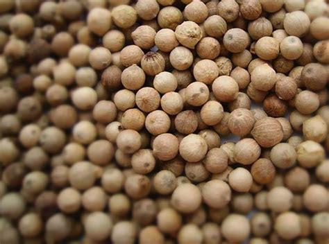 everything you wanted to know about white pepper snaplant com