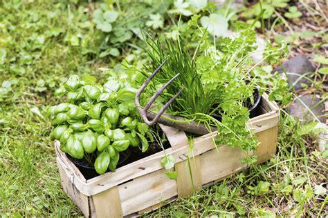 Plantation Herbes Aromatiques Jardiniere by Quelles Plantes Aromatiques Planter En Juillet