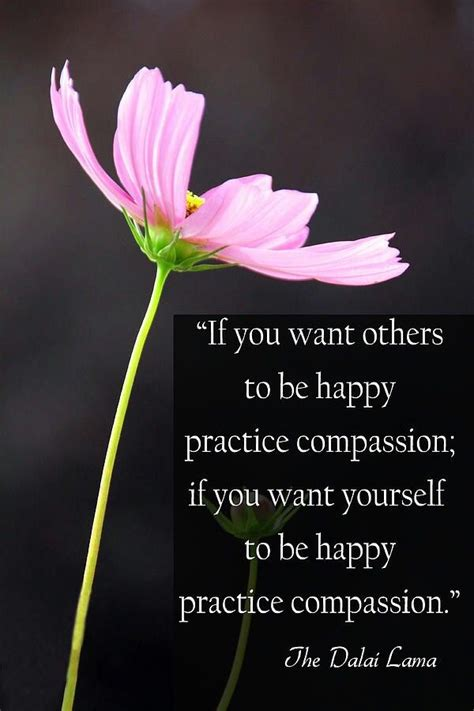 from heaven practicing compassion for yourself and others books practice compassion the daily quotes