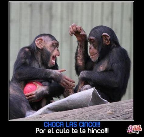 imagenes comicas de monos frases chistosas im 225 genes graciosas y divertidas