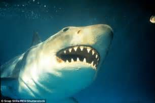 jaws biography channel documentary jaws shark junkyard bruce to be re homed in academy