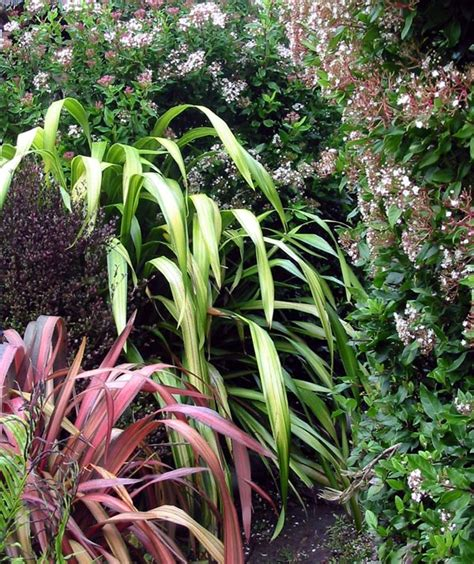 garden foliage plants flax