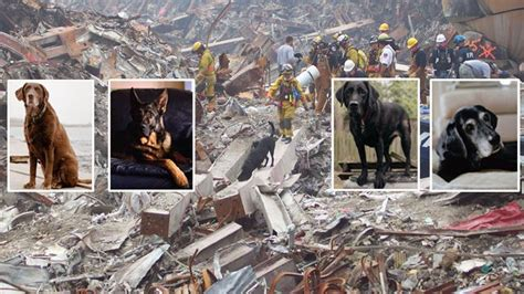 c chaos puppy rescue tribute to the dogged heroes of 9 11 the courier mail