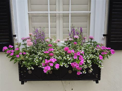 pink  lavender window box sun black wood container