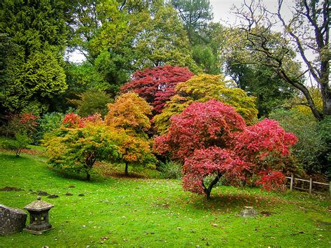 landscaping with maple trees the complete japanese maple guide the tree center