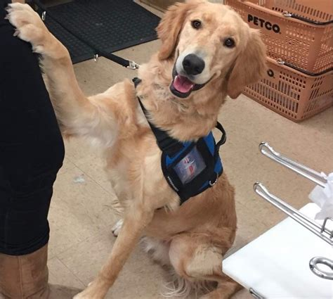 can dogs diabetes can dogs smell low blood sugar in with diabetes cuteness