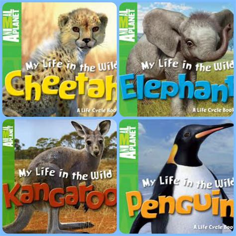 animal picture book nonfiction picture book wednesday cheetahs fast as the