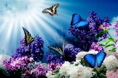 butterfly  wallpapers hd  android appszoom