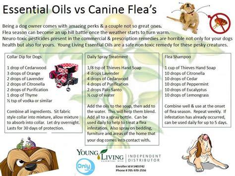 3 week puppy has fleas essential oils vs canine fleas puppy tails