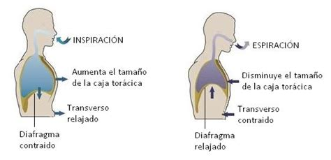 imagenes de respiracion yoga control de la respiraci 243 n y dolor de espalda www medspine es