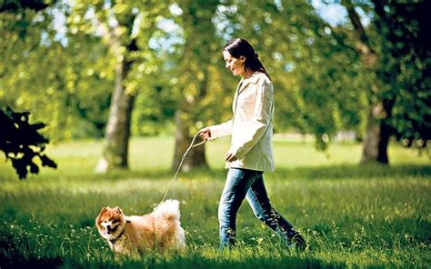 when can i walk my puppy lifecoach how can i maximise the health benefits of dogwalking telegraph