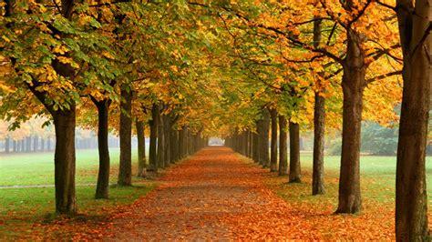 fall nature wallpaper autumn leaves  fall colors