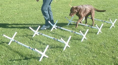 how to a for agility how to teach my to stop biting agility tips bulk leashes